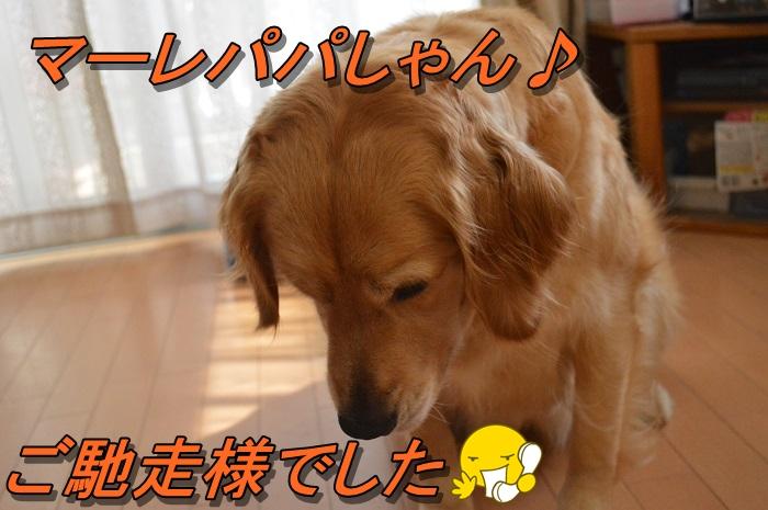 DSC_0114_20130724210931.jpg
