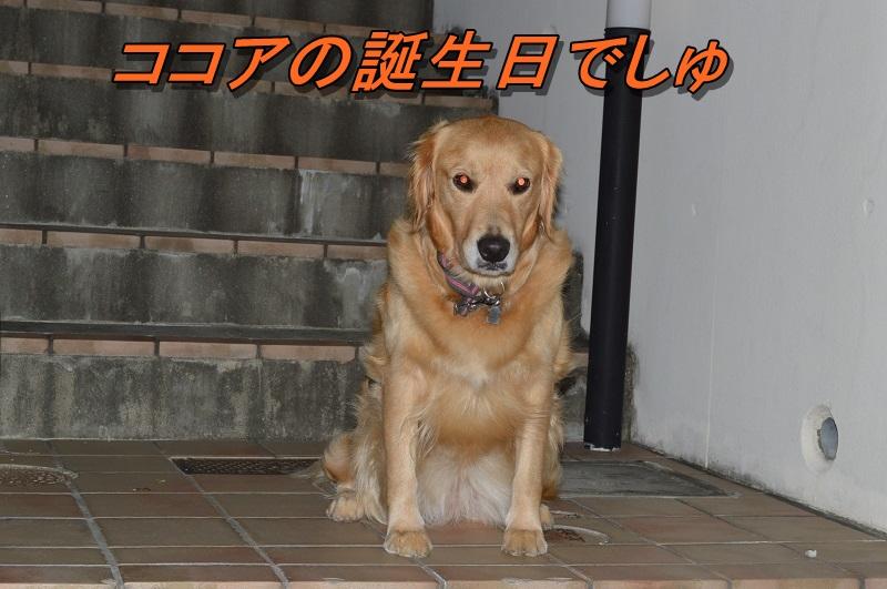 DSC_0178_2013091621023572a.jpg
