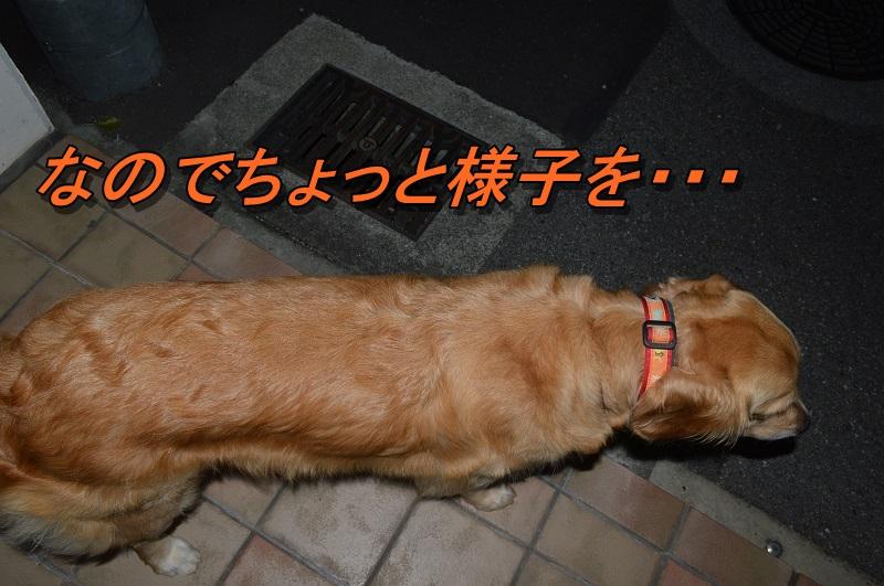 DSC_0180_20130916210234f19.jpg