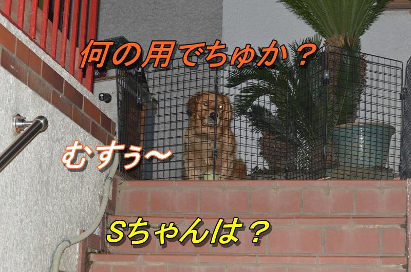 DSC_0183_20130916210233245.jpg