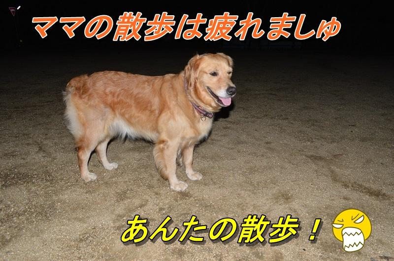 DSC_0205_20130916210315c74.jpg