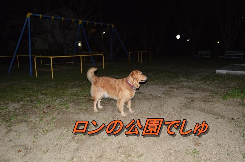 DSC_0248_20130919220719eef.jpg