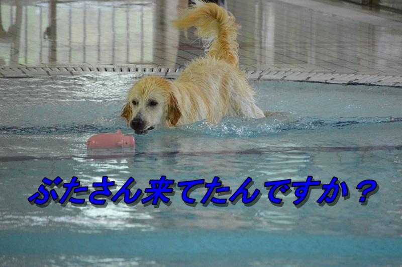 DSC_0263_20130730224618ee9.jpg