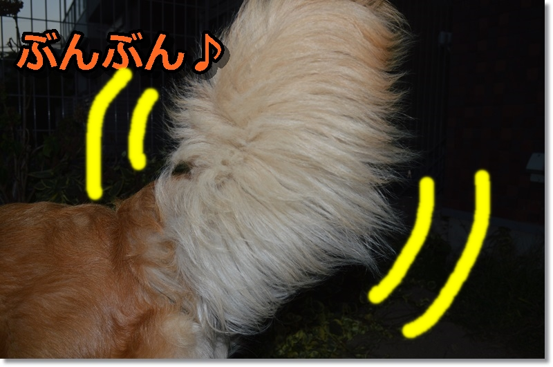 DSC_0352-006.jpg