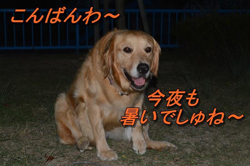 DSC_0435_20130801214956552.jpg
