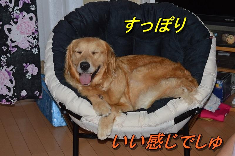 DSC_0759_201308052156271aa.jpg