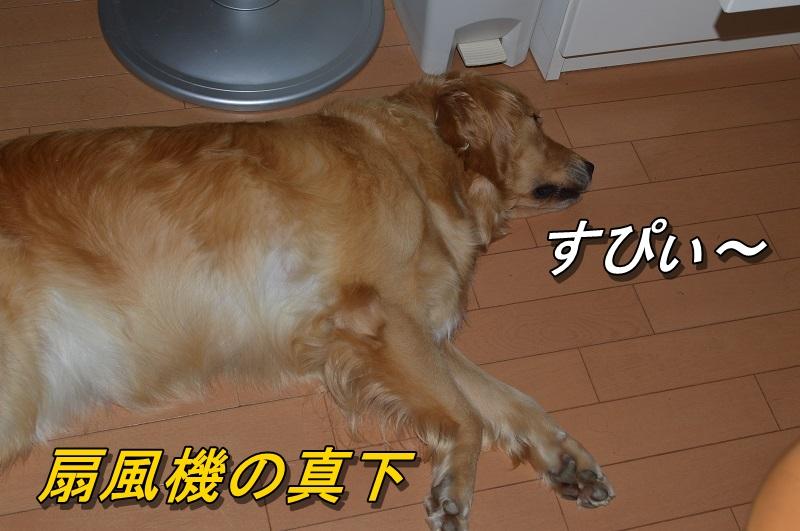 DSC_0854_20130827223216ed7.jpg