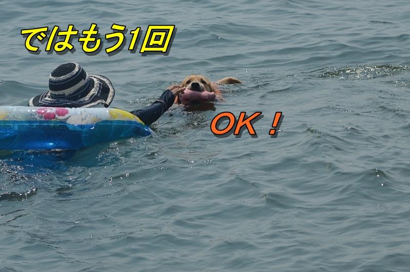DSC_0857_20130813203922c79.jpg