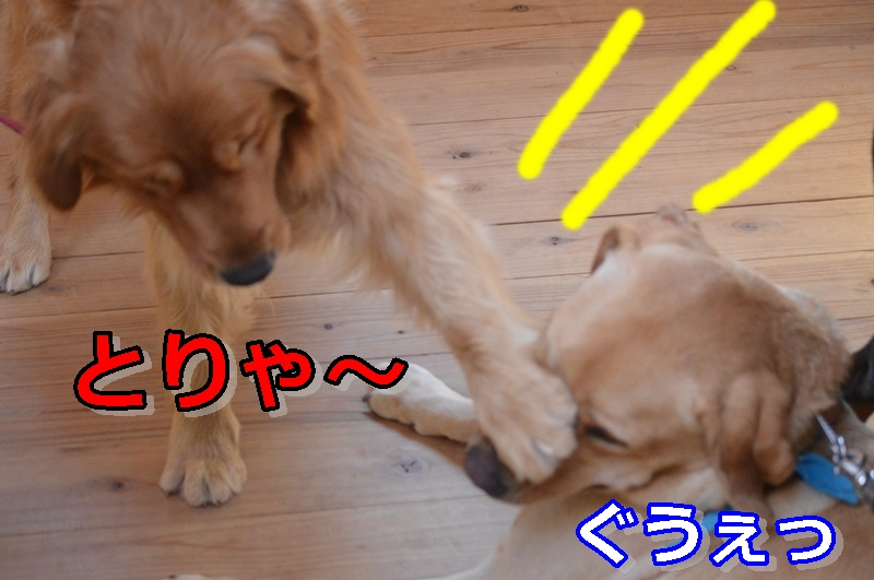 DSC_0863-047.jpg