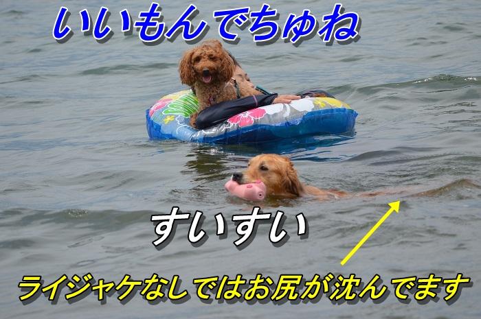 DSC_0866_20130716225337.jpg