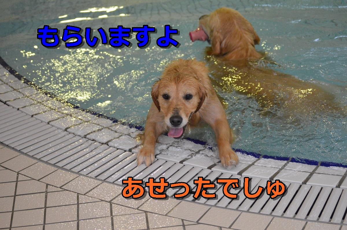 DSC_0885-090.jpg