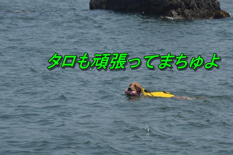 DSC_0956_20130813205224d8f.jpg