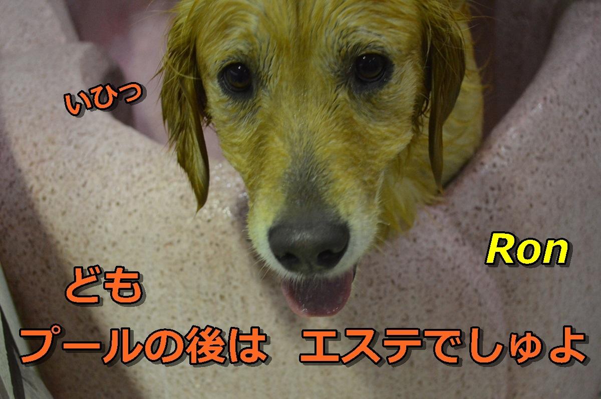 DSC_0972-001.jpg