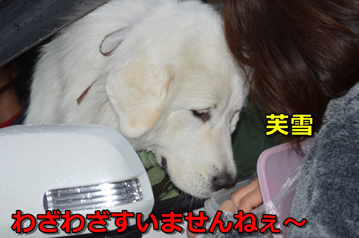 DSC_1006-035.jpg