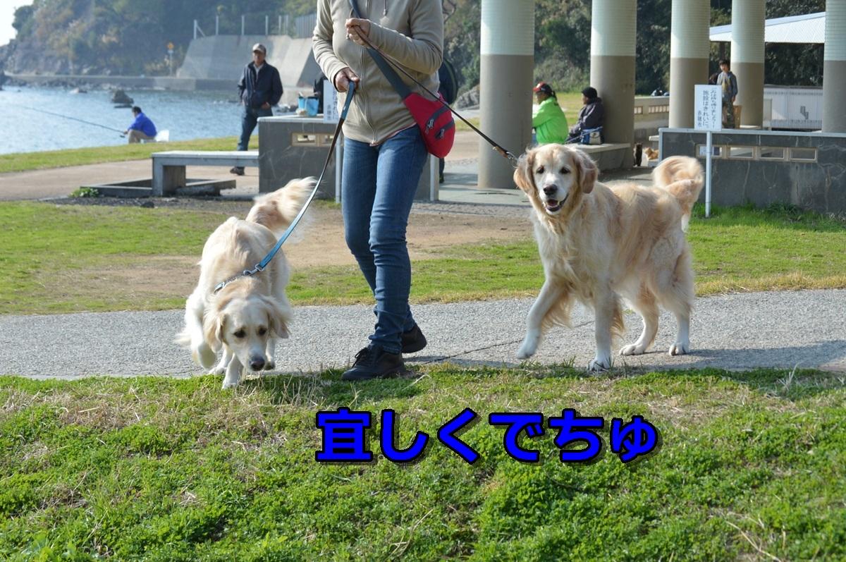 DSC_1008-012.jpg