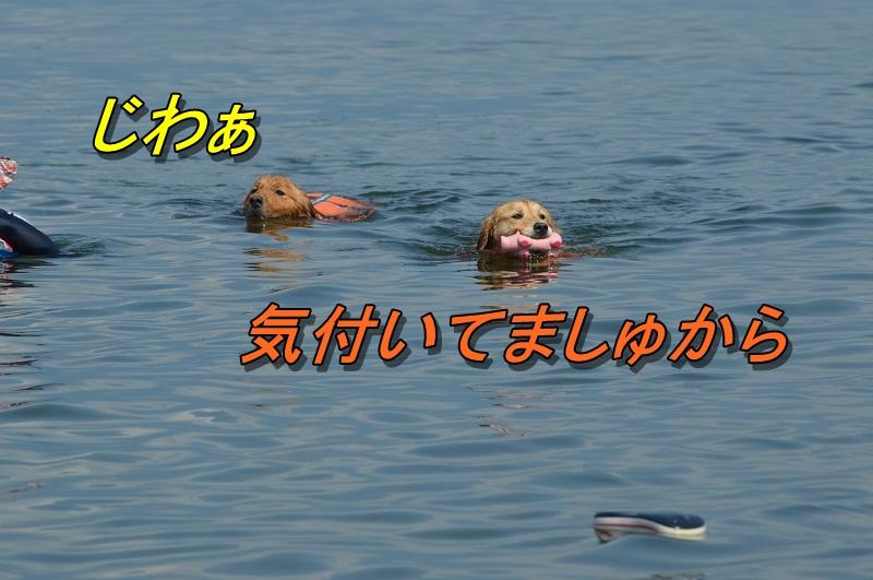 DSC_1020_2013082613424729a.jpg