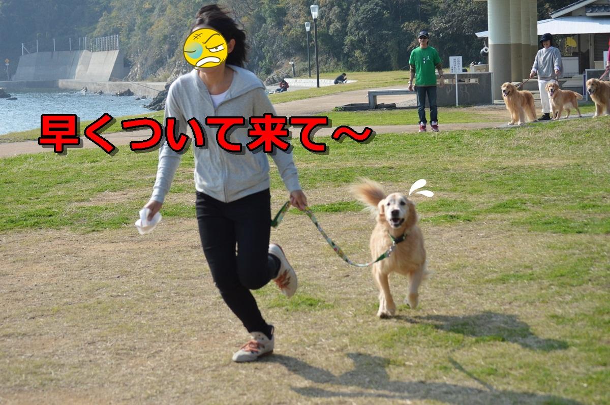 DSC_1147-042_20131119223755015.jpg