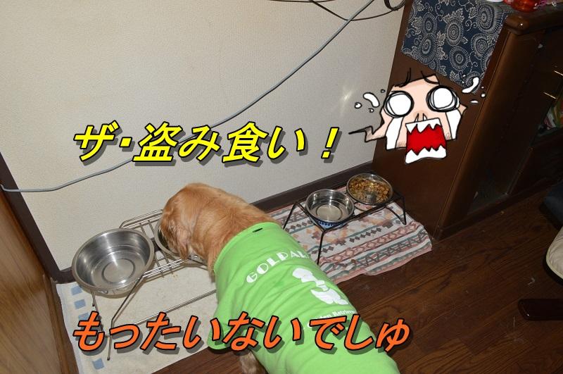 DSC_1228.jpg
