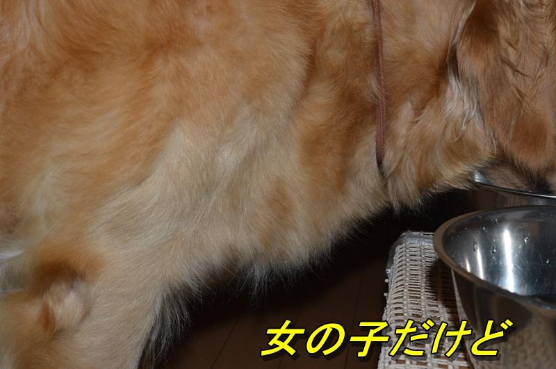 DSC_1257.jpg