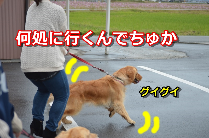 DSC_1586-004.jpg