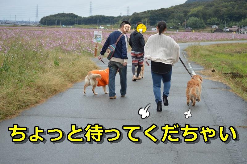 DSC_1601-019.jpg