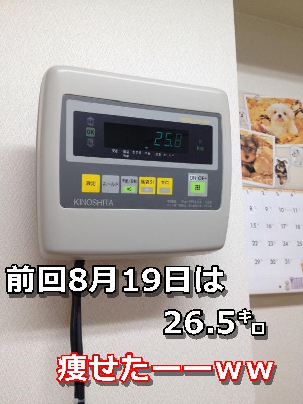 IMG_2613-002.jpg
