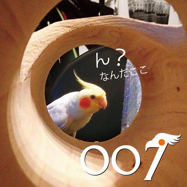 007-02.jpg