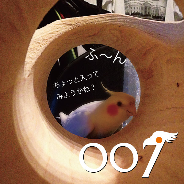 007-04.jpg