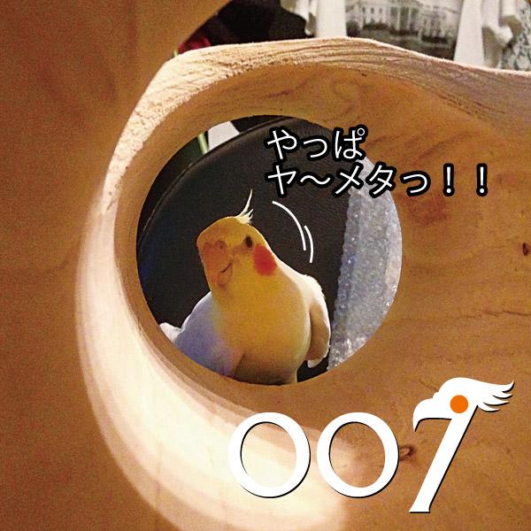 007-05.jpg