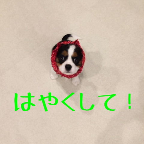 fc2blog_2014102821025387d.jpg