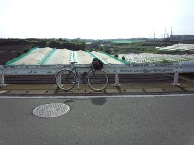 photo_randner_miura_hatake_2013_0622.jpg