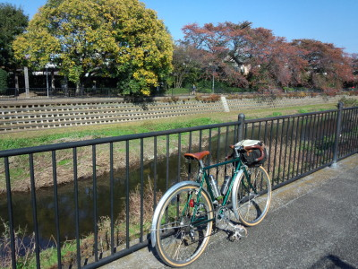 photo_randner_tamanogawa_midori_2013_1116.jpg