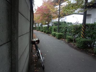 photo_randner_turimigawa_kouyou_2013_1109.jpg