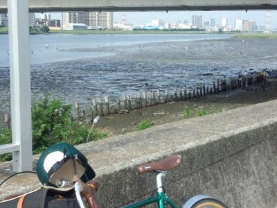 photo_randner_turumigawa_tamagawa_kaitori_2013_-7201.jpg