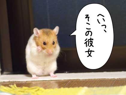 gotu3_20141129204537cd8.jpg