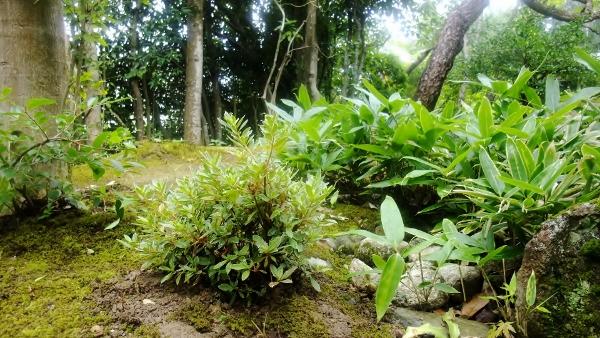 岡さん植樹