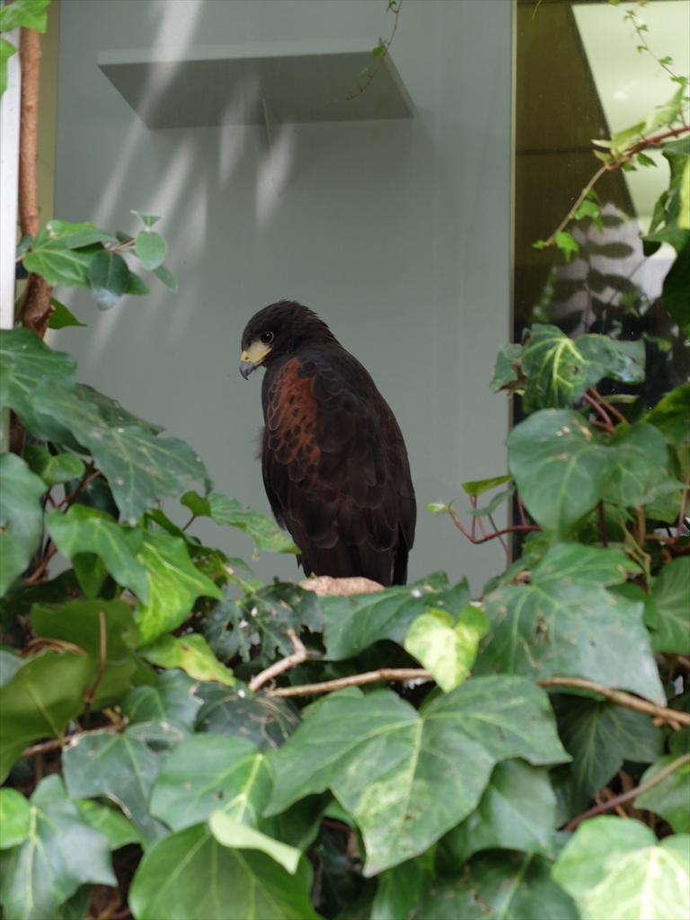 例のビルにいる鳥_1