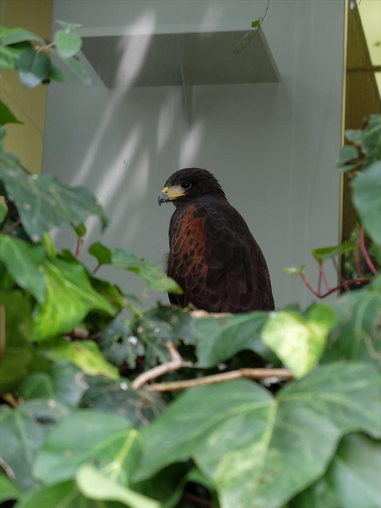 例のビルにいる鳥_2