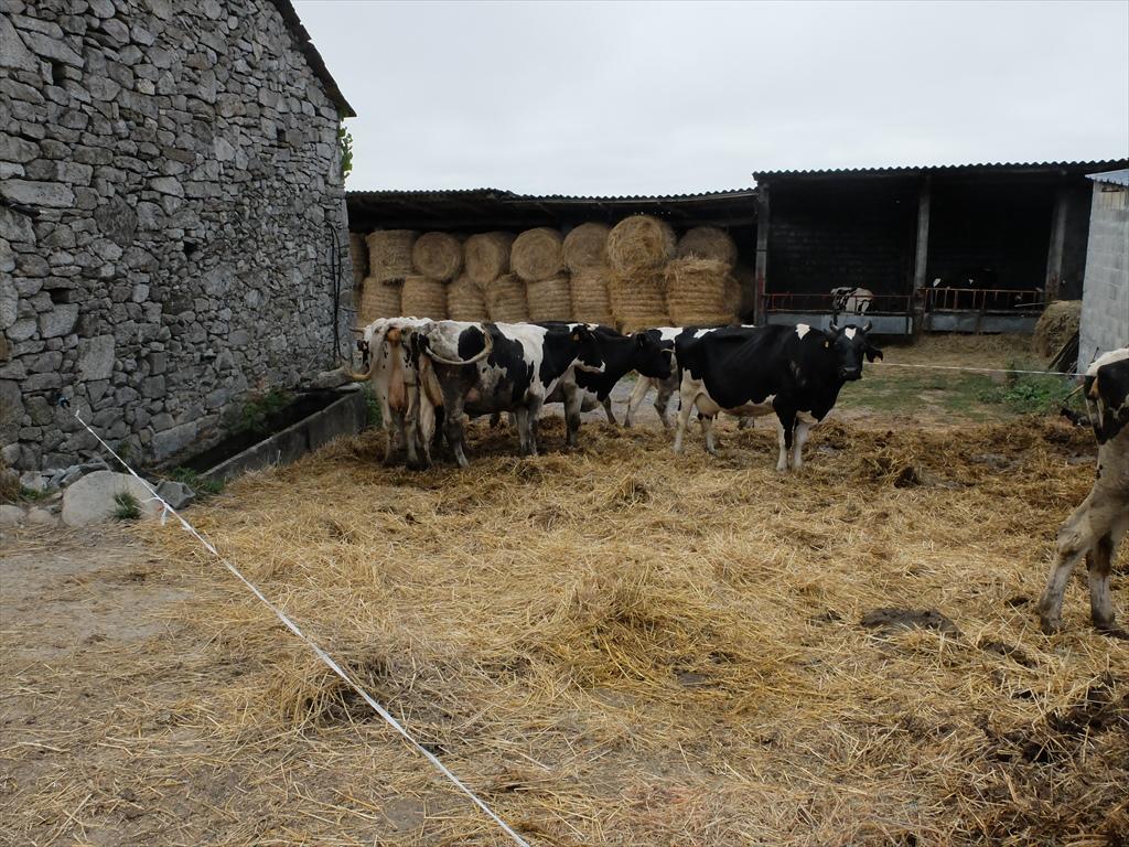 この辺は酪農が盛んなようだ_2