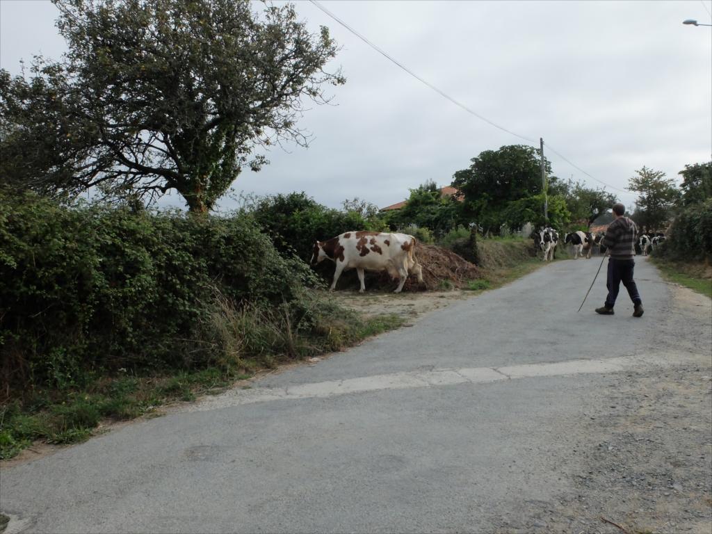 お店の手前で仲間を待っていると、牛さんの大群に遭遇_1