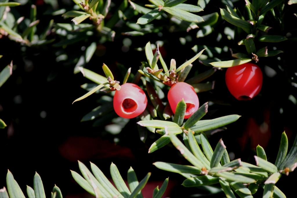 赤い変わった花が_2