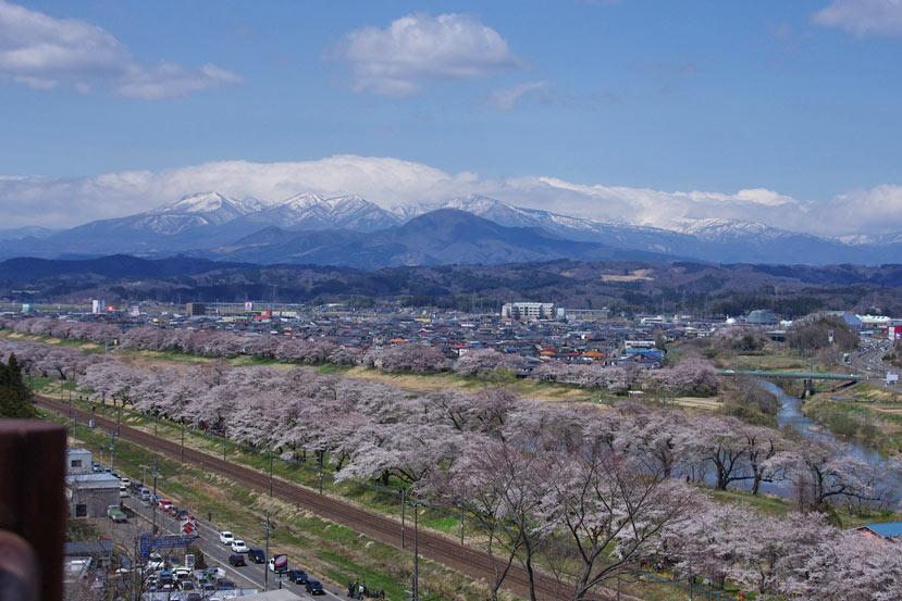 IMGPsakura8-417.jpg