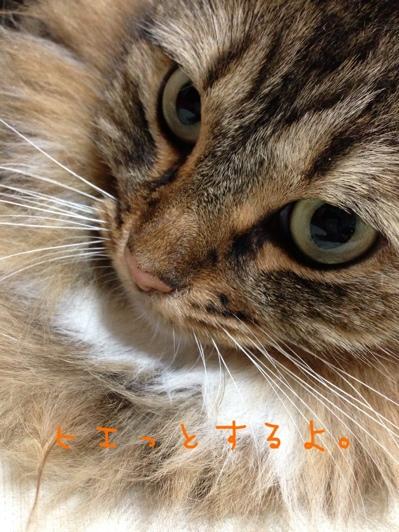 fc2blog_20130613103327e05.jpg