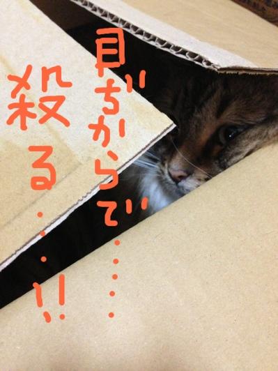 fc2blog_201307290930149dc.jpg