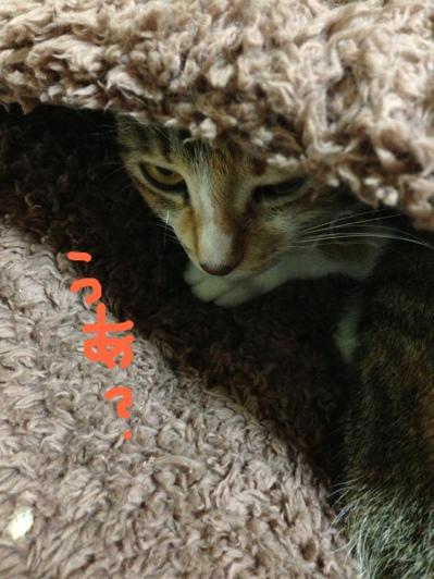 fc2blog_2013072917110253e.jpg