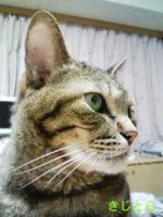 kiji-1_c.jpg