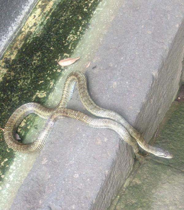 20130715_snake.jpg