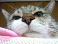 猫はダラ幹