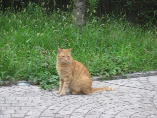 3猫 830