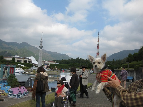 3東京タワー 1102
